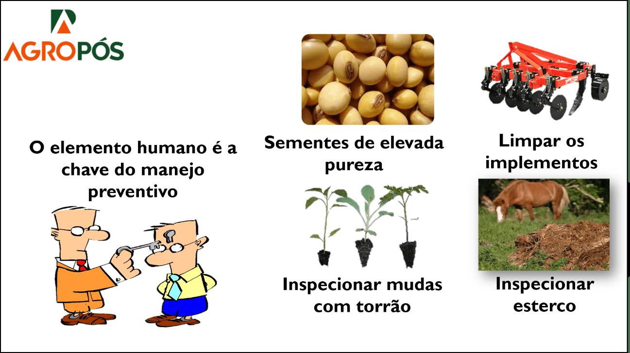 Controle Preventivo de Plantas Daninhas