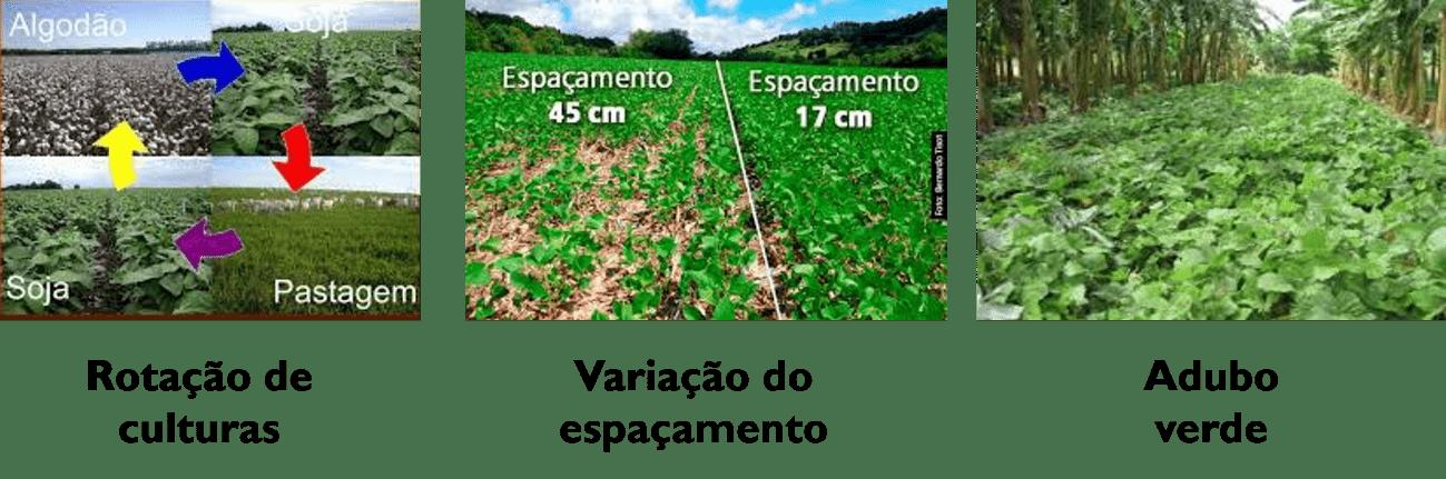Controle Cultural de Plantas Daninhas