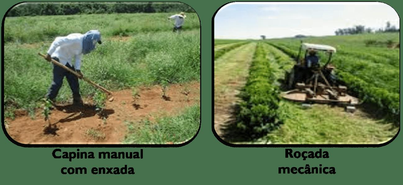 Controle Mecânico de Plantas Daninhas