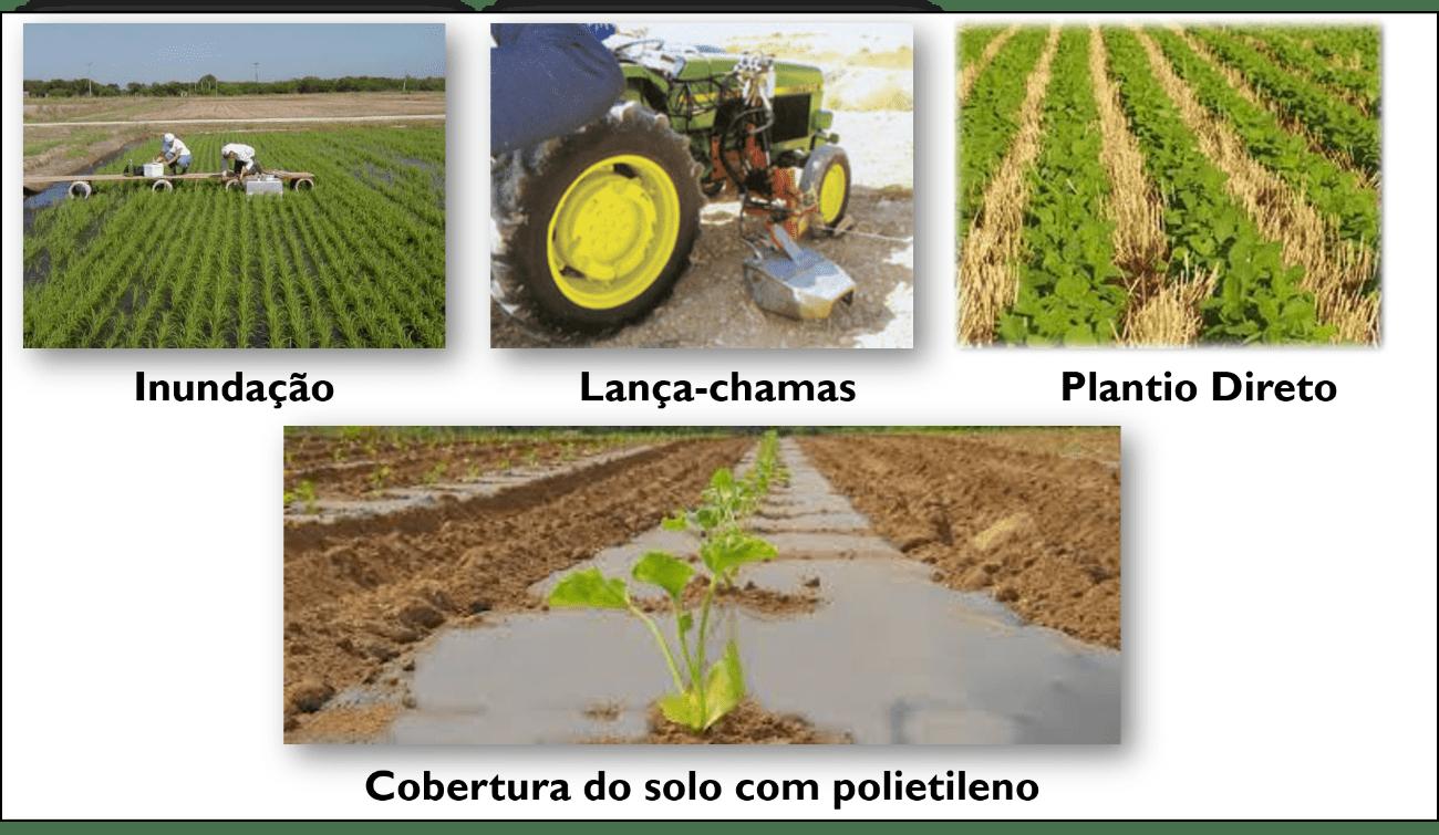 Controle Físico de Plantas Daninhas