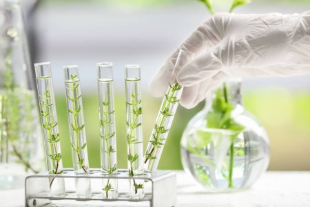 Melhoramento Genético de Plantas