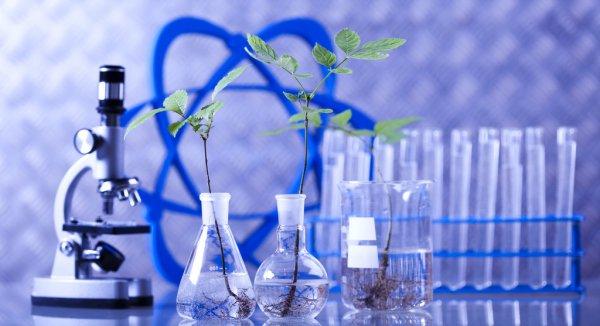 Características do Melhoramento Genético Florestal