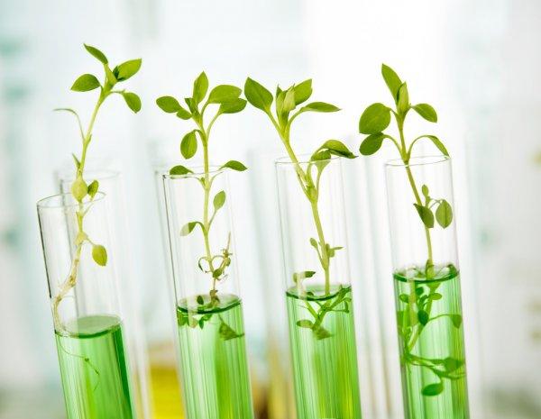 melhoramento genético florestal