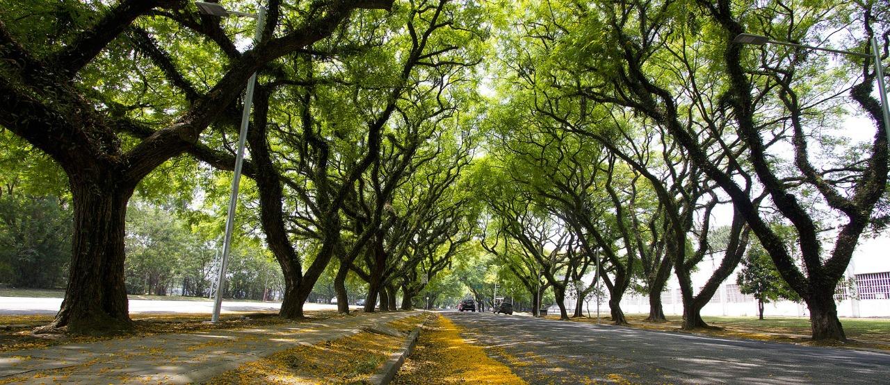 Pós-graduação em Gestão da Arborização Urbana e do Paisagismo