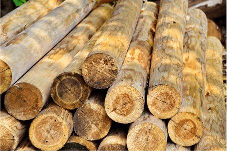 Os Principais Produtos Florestais Obtidos de Nossas Florestas Plantadas