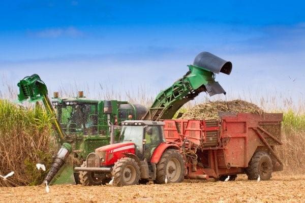 Produtividade da cana-de-açúcar no Brasil