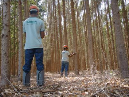 Será que você sabe o tudo sobre o inventario florestal?