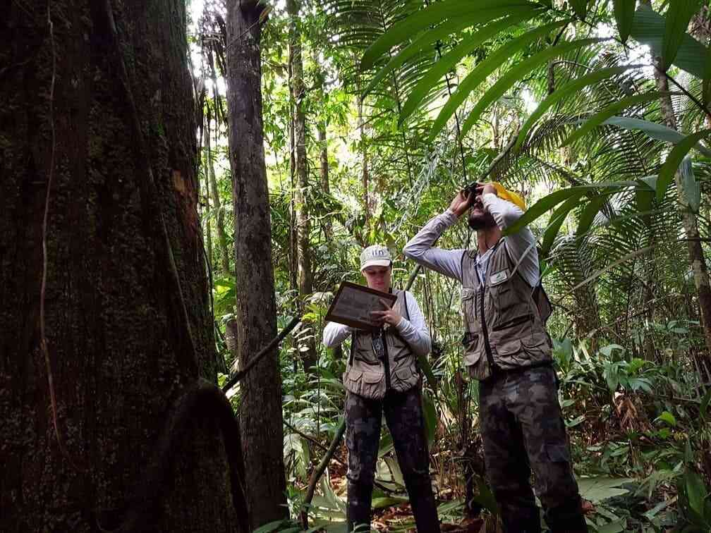 Inventario Florestal Nacional