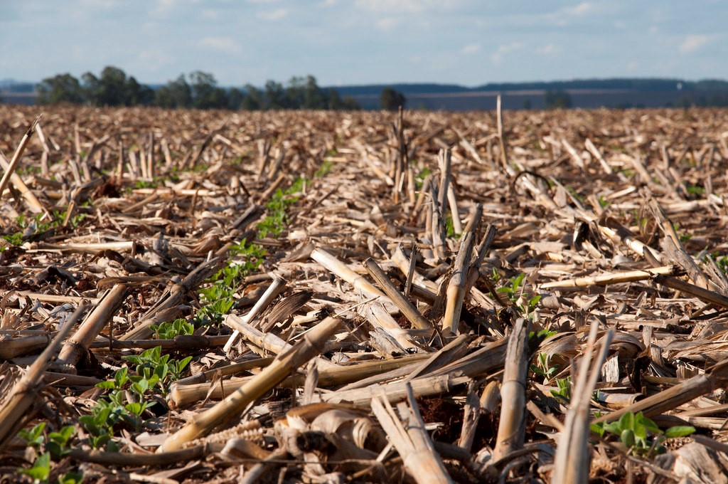 Métodos de plantio da soja
