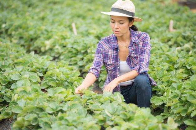 Tipos de produtores do agronegócio