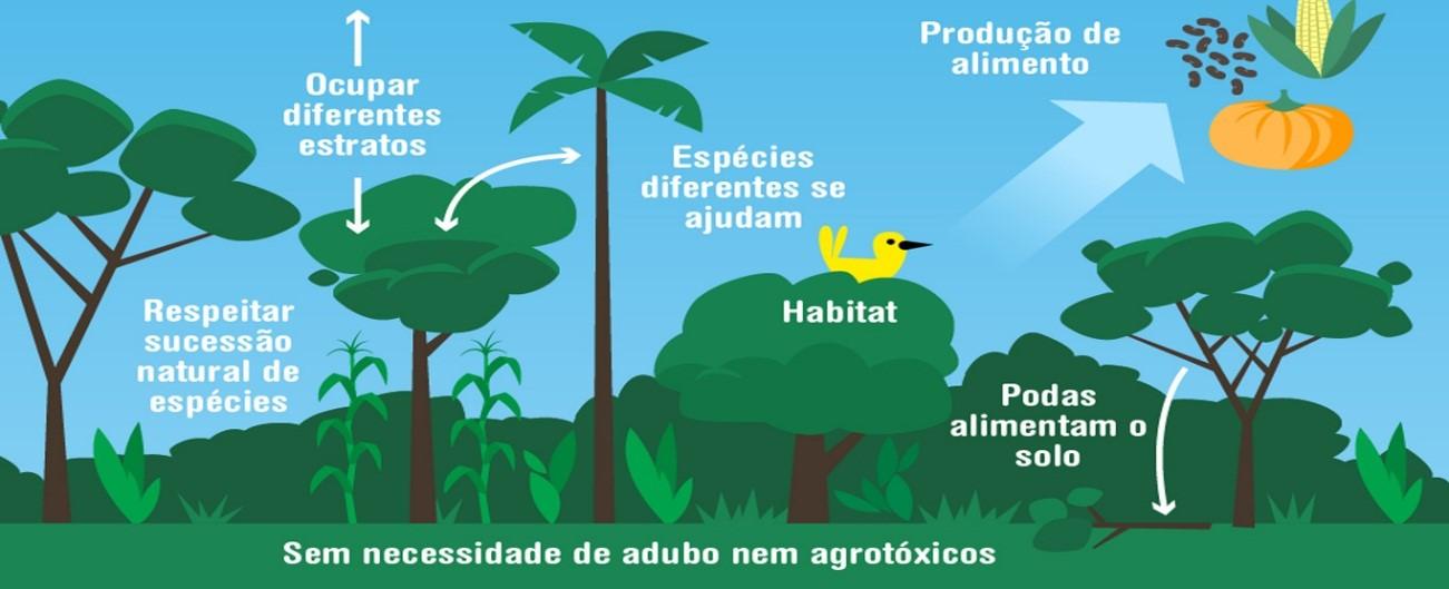 Benefícios dos sistemas agroflorestais
