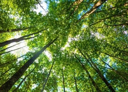 Manejo Florestal Sustentável e seus benefícios.