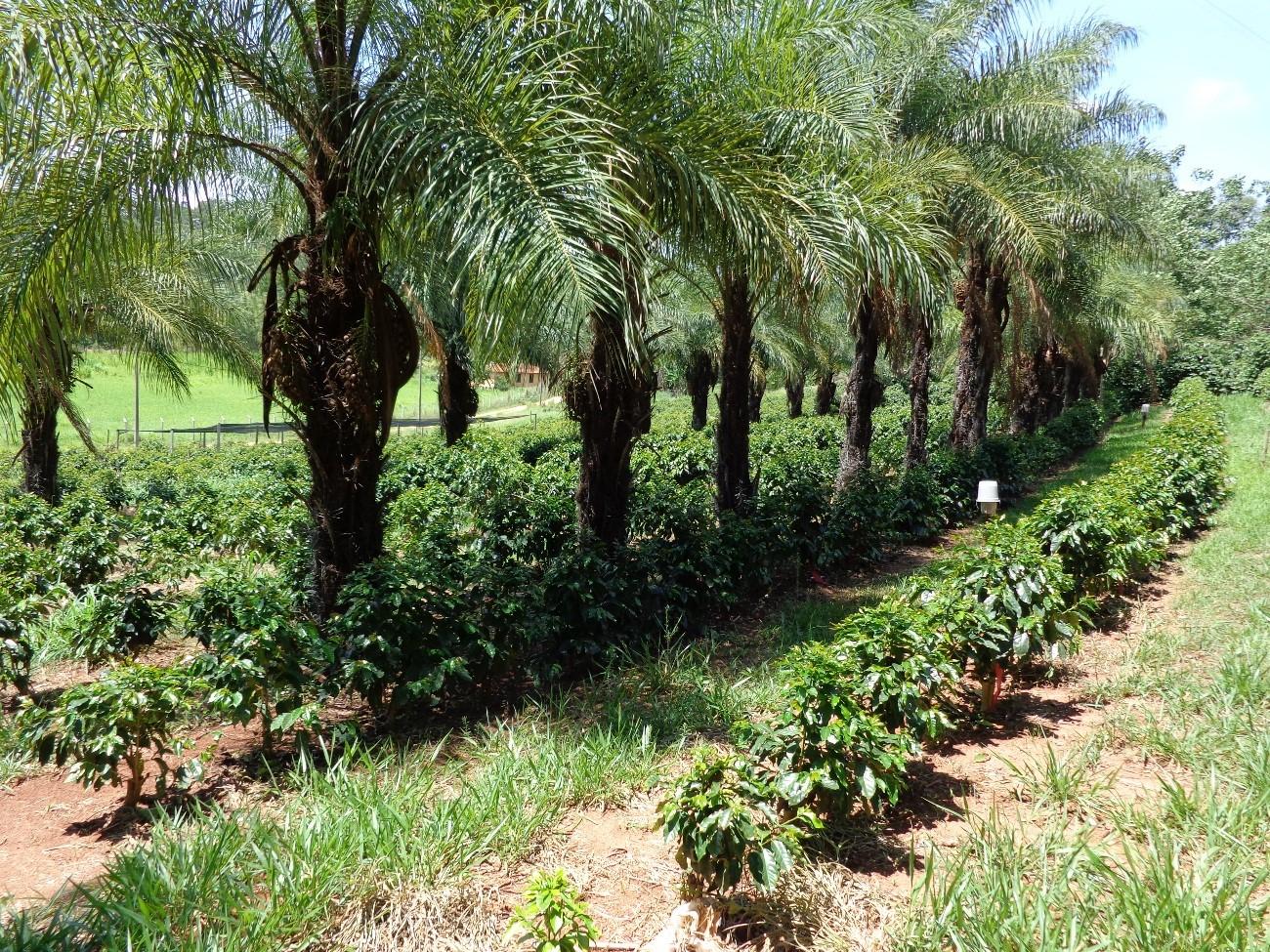 Sistemas agroflorestais: conheça 10 benefícios desse sistema