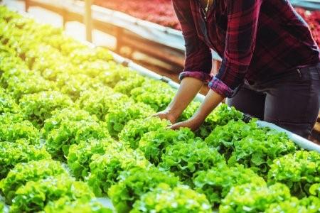 Agricultura sustentável.