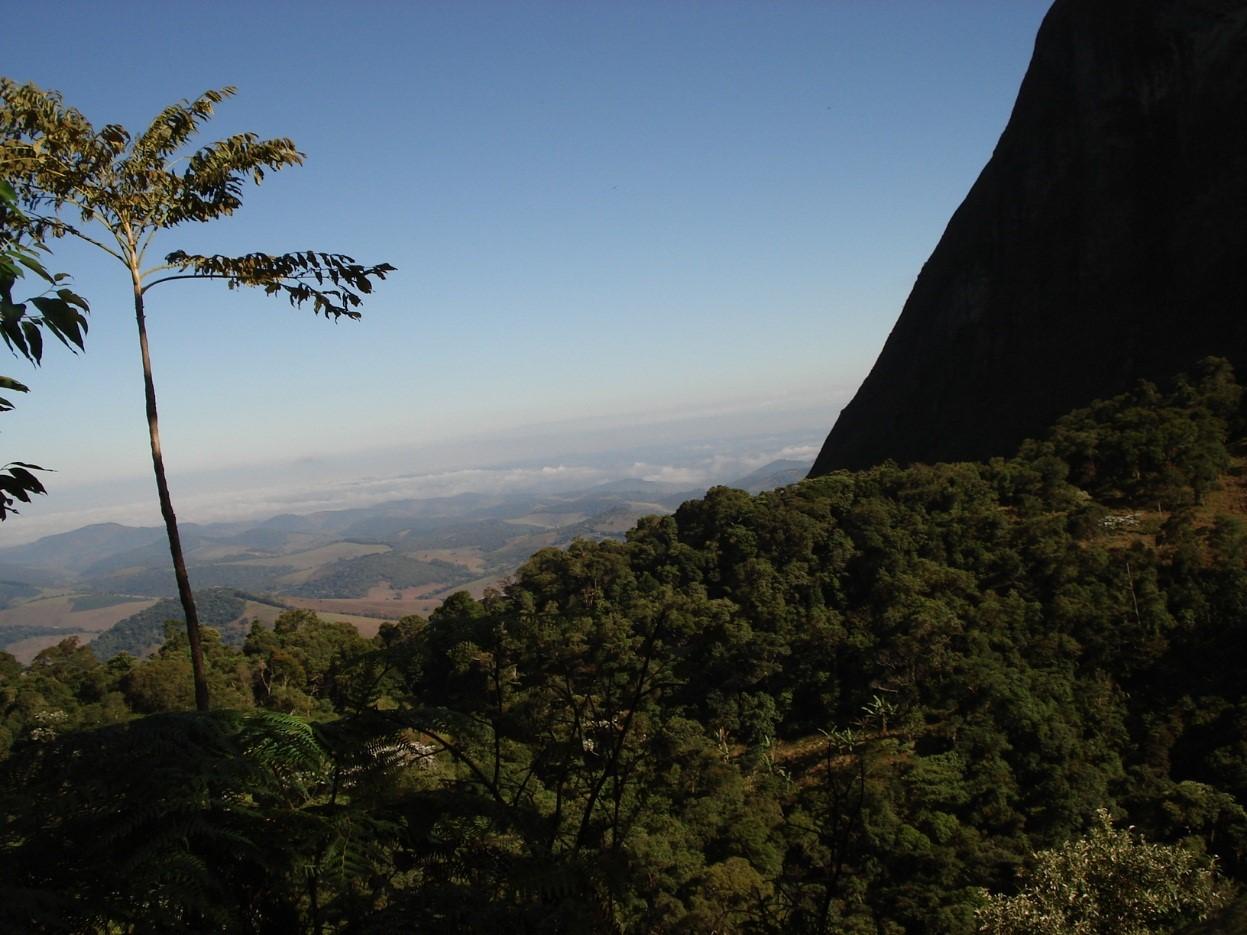 Biodiversidade brasileira - Bioma mata atlântica
