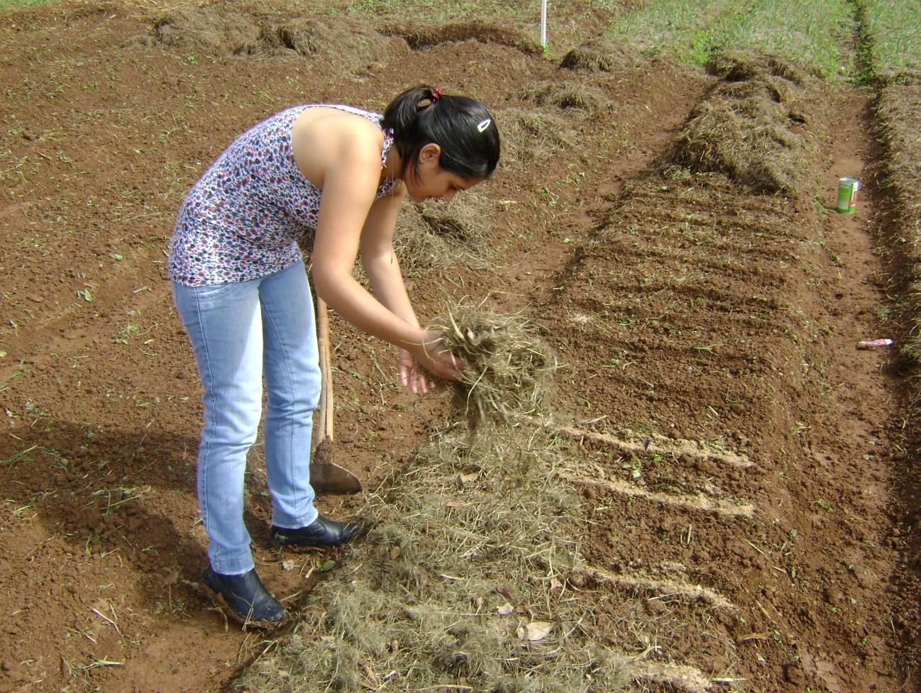 Cobertura com palhada para a conservação do solo