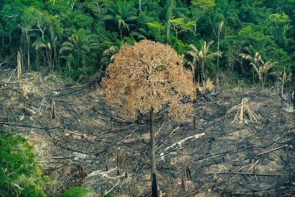 Desmatamento: causas e consequências
