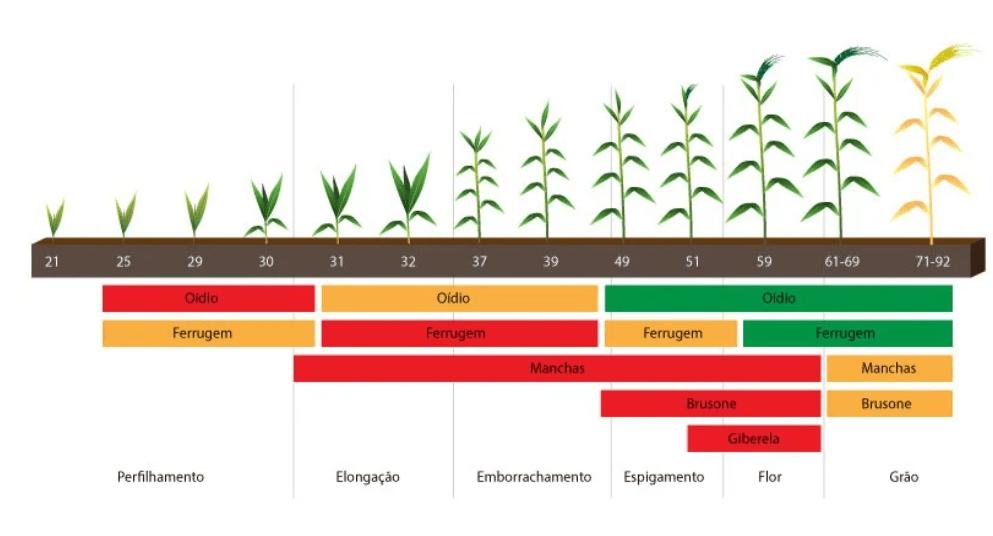 Fase de ocorrência das principais doenças do trigo