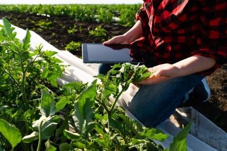 Tecnologia na Agricultura de precisão.