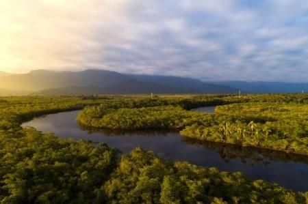 Biodiversidade brasileira - bioma Amazônia