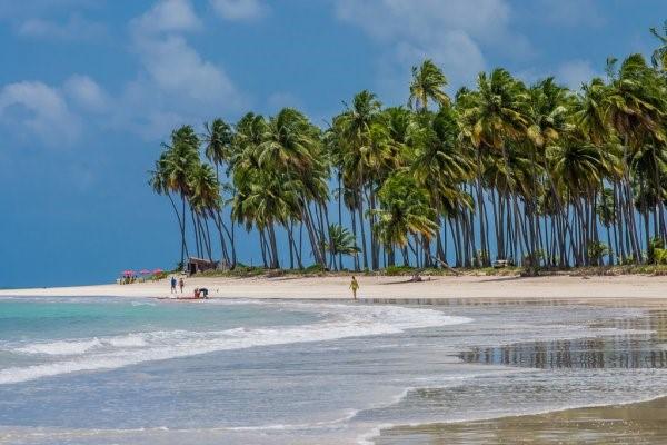 Biodiversidade brasileira - bioma Costeiro