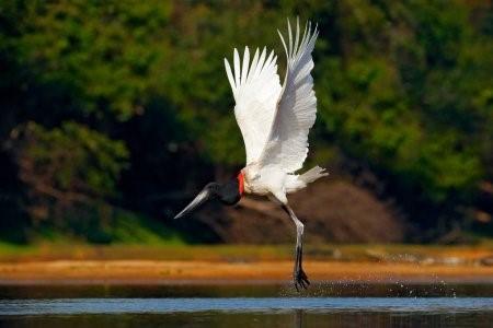 Biodiversidade brasileira - bioma pantanal