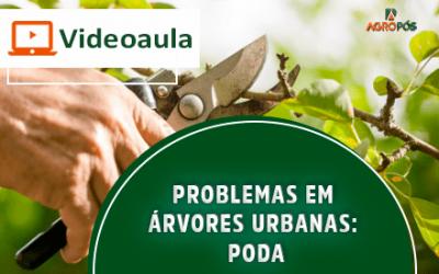 [VIDEOAULA] Problemas em Árvores Urbanas: Poda.