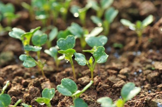 Adubação com fertilizantes NPK