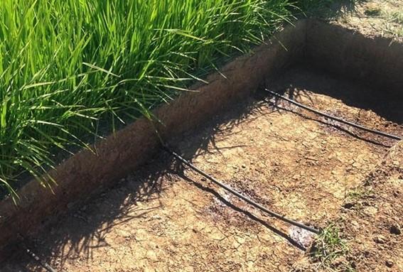 Irrigação por Gotejamento Subterrâneo