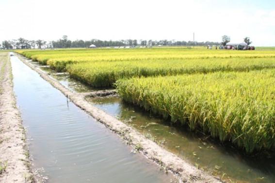Irrigação por Superfície