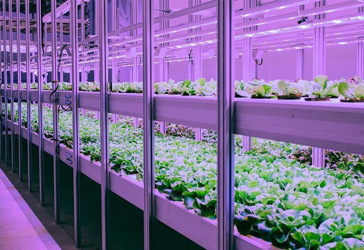 Sistema de Agricultura Vertical