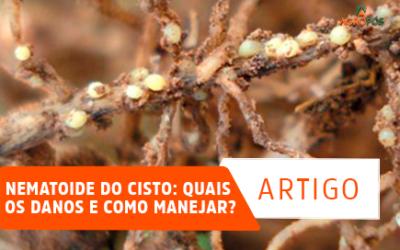 Nematoide do Cisto: quais os danos e como manejar?
