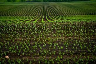 Benefícios do tratamento de sementes