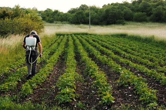 Defensivos agrícolas na agricultura.