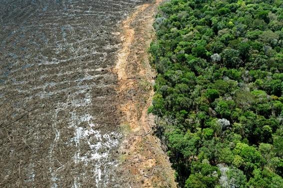 Plano de Recuperação de Áreas Degradadas - PRAD