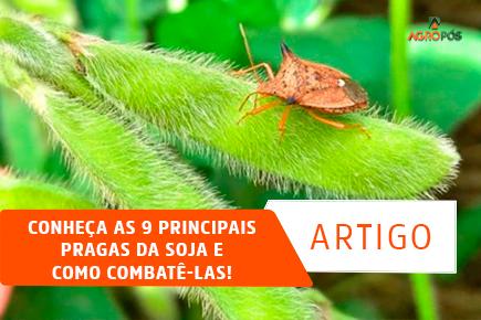 Conheça as 9 Principais Pragas da Soja e como Combatê-las!