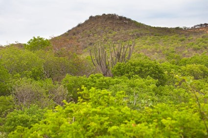 Florestas Brasileiras: Caatinga