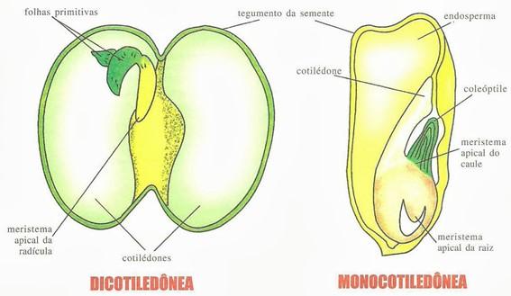 Características dos tipos de sementes