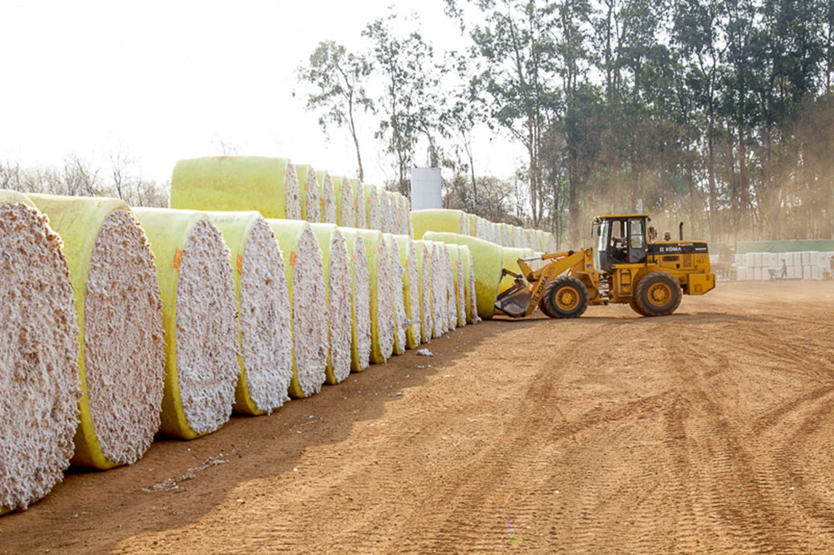 Exportação de algodão