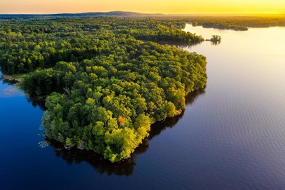 Fauna e Flora - Floresta Amazônia