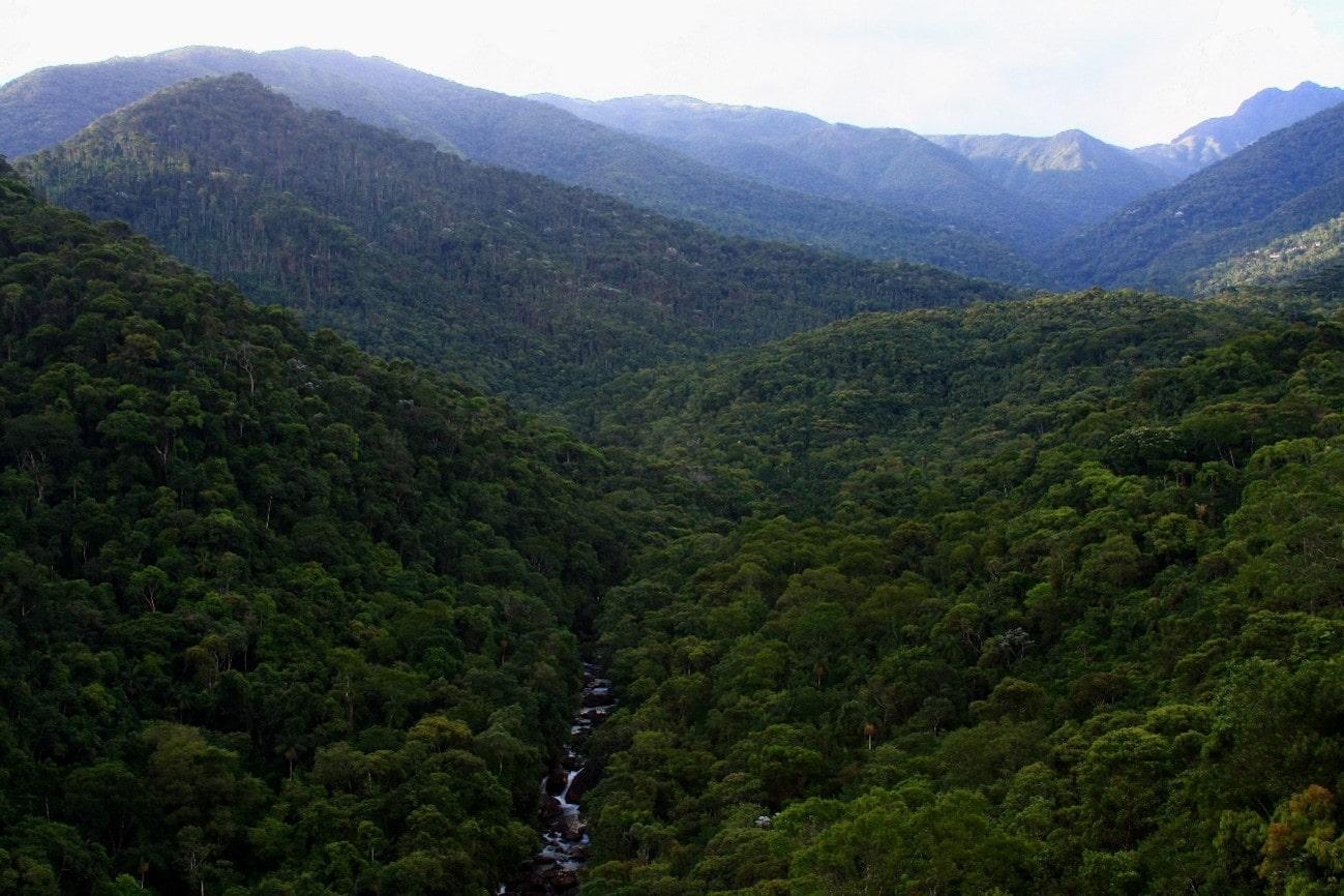 Florestas Brasileiras