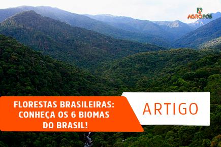 Florestas Brasileiras: Conheça os 6 Biomas do Brasil!