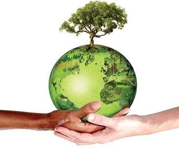 Importância da Preservação do Meio Ambiente