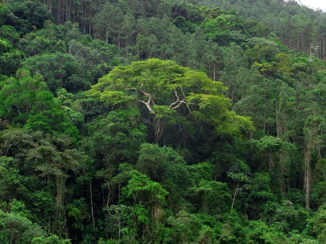 Florestas Brasileiras: Mata Atlântica