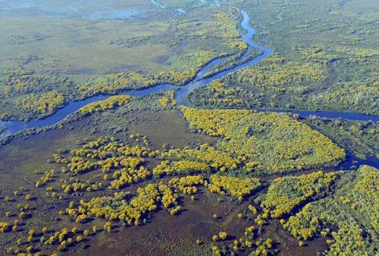 Fauna e Flora - Pantanal