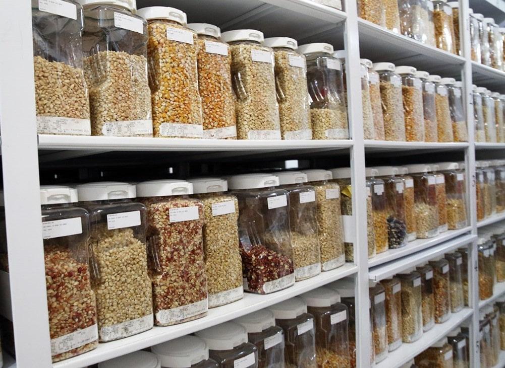 Tipos de sementes e o seu armazenamento