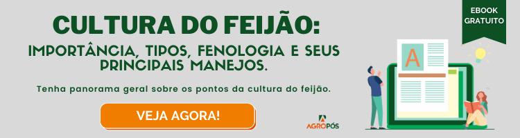 Cultura do Feijão: importância, tipos, fenologia e seus principais manejos.