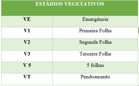 Germinação e Emergência do milho