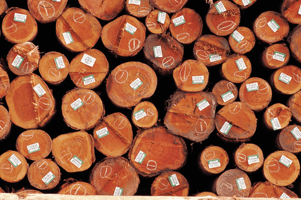 Certificação Ambiental Madeireiros