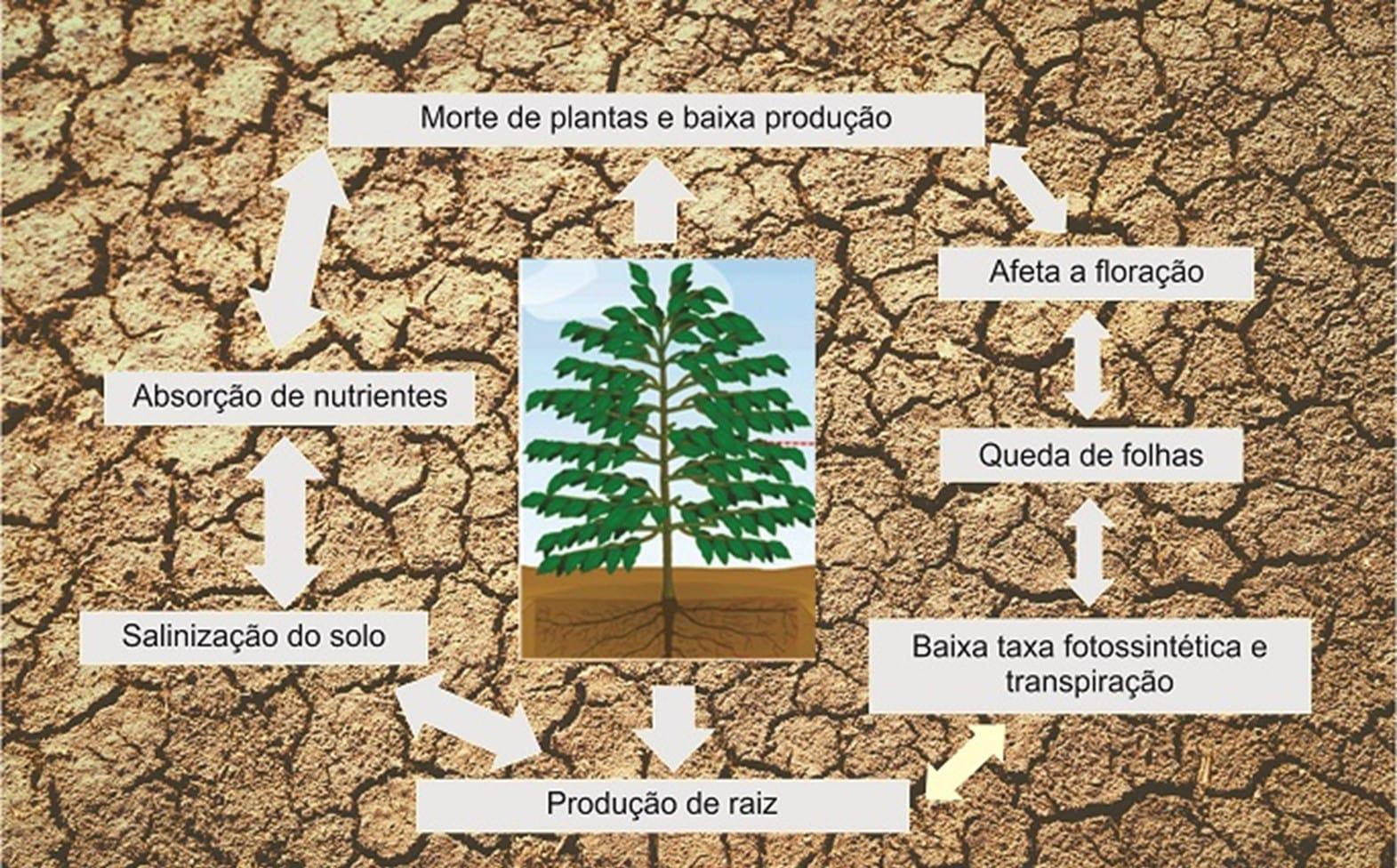 Consequências do estresse hídrico para a planta